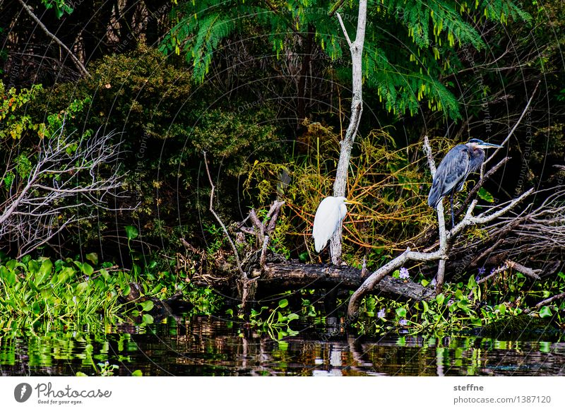 Nature Vacation & Travel Travel photography Bird Tourism USA Discover Heron Rich pasture Louisiana New Orleans