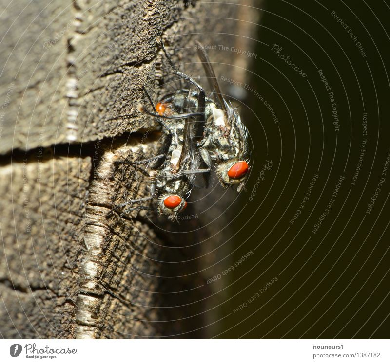 double decker Animal Wild animal Fly Wing 2 Rutting season To hold on To enjoy Hang Crouch Sex Sit Propagation Wood Compound eye Dipterous Proboscis Feeler