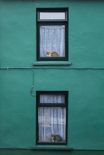 copycat House (Residential Structure) Wall (barrier) Wall (building) Window Animal Pet Cat 2 Wait Esthetic Green Black White Luxury Coincidence Symmetry