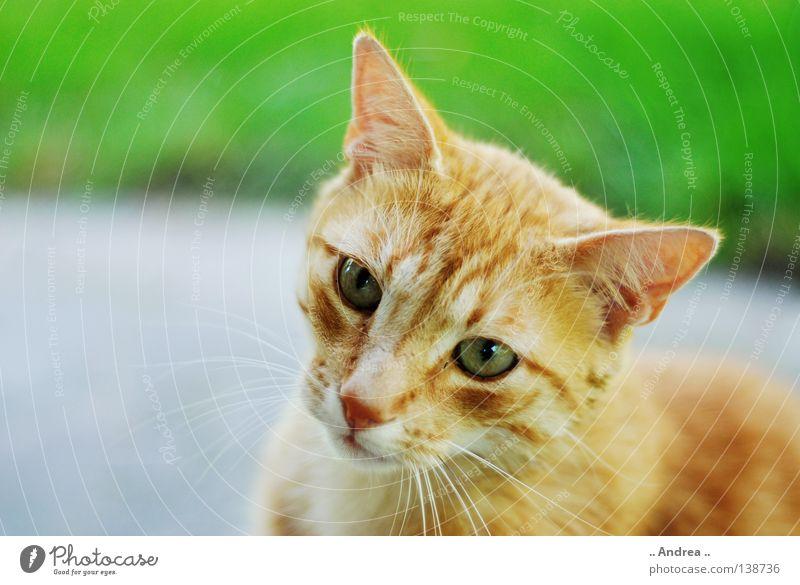 Cat Green Red Sadness Eyes Friendliness Nose Grief Pelt Mammal Domestic cat Whisker