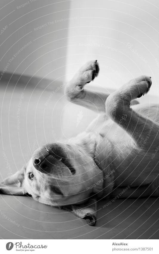 Dog Beautiful Joy Animal Natural Funny Playing Happy Lie Wild Free Authentic Esthetic Near Serene Ear