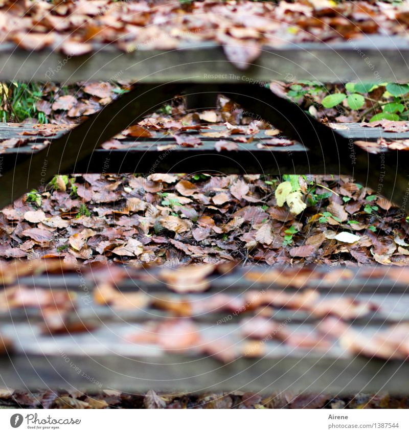 A like Off and Over Picnic Hiking Table Bench Beer garden Autumn Autumn leaves Wood Characters Old To fall Sit Wet Natural Gloomy Brown Black Appetite Bizarre
