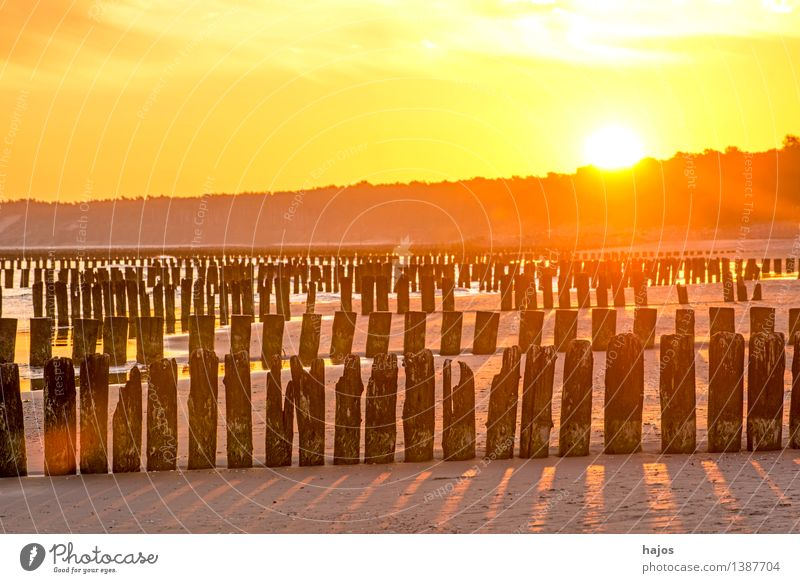 Sunrise at the Baltic Sea with groynes Leisure and hobbies Vacation & Travel Beach Ocean Nature Water Old Dark Bright Historic Yellow Pink Red Black Moody