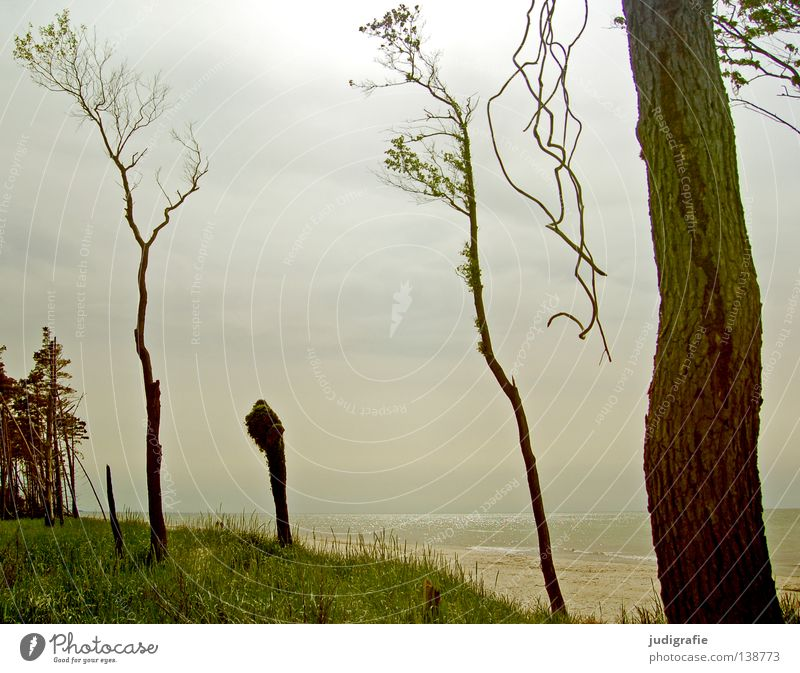 Nature Water Sky Tree Ocean Summer Beach Calm Loneliness Colour Relaxation Meadow Grass Coast Environment Longing