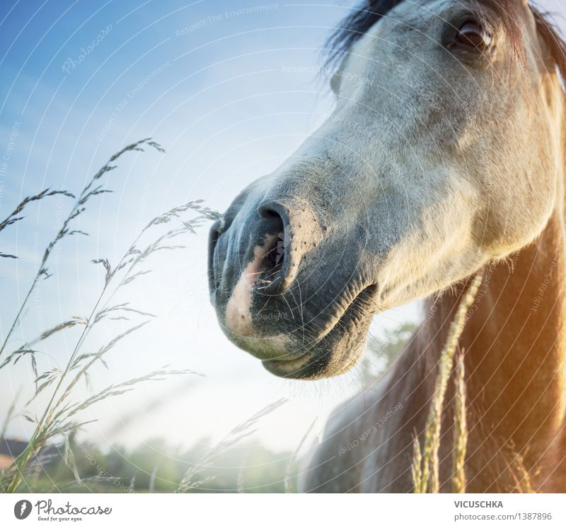 Sky Nature Summer Animal Spring Meadow Grass Lifestyle Field Beautiful weather Nose Horse Animal face Sky blue Ride Horse's head