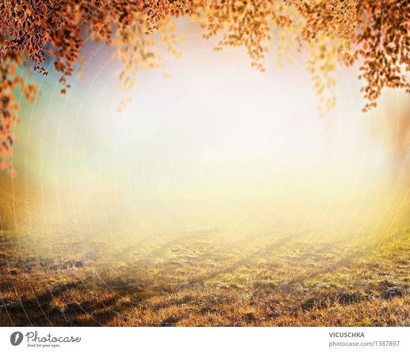Autumn nature background, blurred Style Design Garden Nature Plant Sunrise Sunset Sunlight Tree Grass Park Meadow Soft Yellow Background picture September