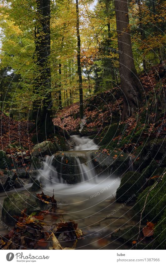 autumn forest Environment Nature Landscape Water Autumn Climate Tree Forest Brook Waterfall Moody Sadness Grief Automn wood Leaf Forest of Bregenz