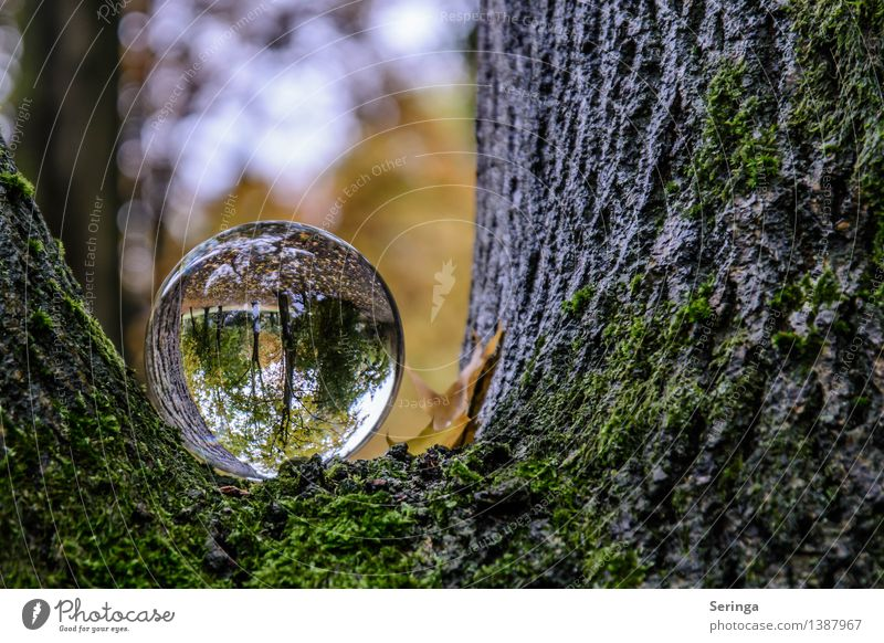 Nature Plant Tree Landscape Animal Dark Forest Environment Warmth Happy Glittering Park Dream Illuminate Glass Bushes
