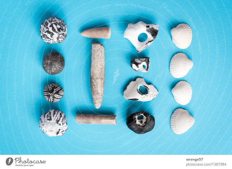 Floating flotsam III Coast Stone Old Maritime Blue Brown Black White Still Life Mussel Mussel shell Fossil Sea urchin Discovery Flotsam and jetsam