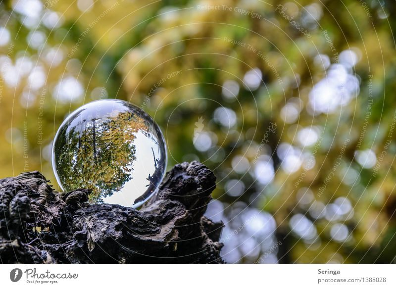 View through the ball 7 Environment Nature Landscape Plant Animal Autumn Garden Park Meadow Field Forest Magnifying glass Glass Glittering Illuminate Glass ball