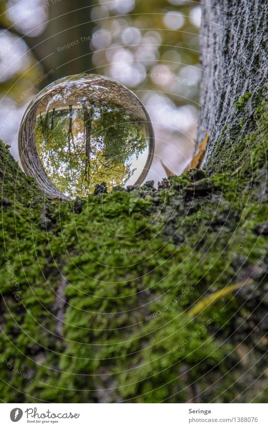 View through the sphere 6 Environment Nature Landscape Plant Animal Autumn Garden Park Meadow Field Forest Magnifying glass Glass Glittering Illuminate Looking