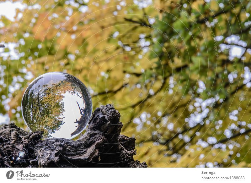 View through the ball 5 Environment Nature Landscape Plant Animal Autumn Tree Garden Park Meadow Field Forest Magnifying glass Glass Touch Dream Glass ball