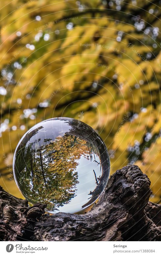 View through the ball 4 Environment Nature Landscape Plant Animal Autumn Tree Garden Park Meadow Forest Magnifying glass Glass Glittering Dream Glass ball