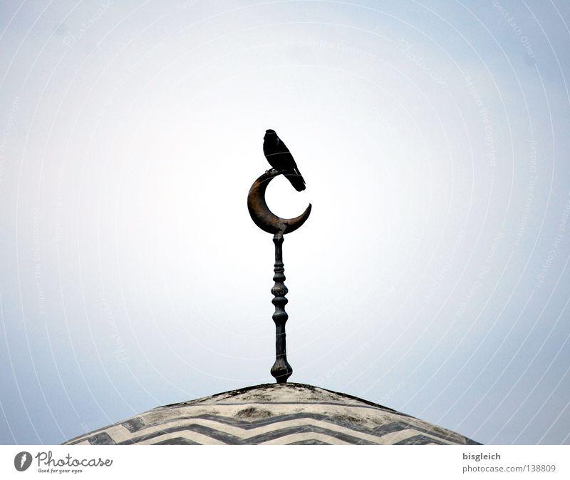 Sky Religion and faith Bird Roof Asia Ornament Moral Islam Mosque Guard Philosophy Half moon