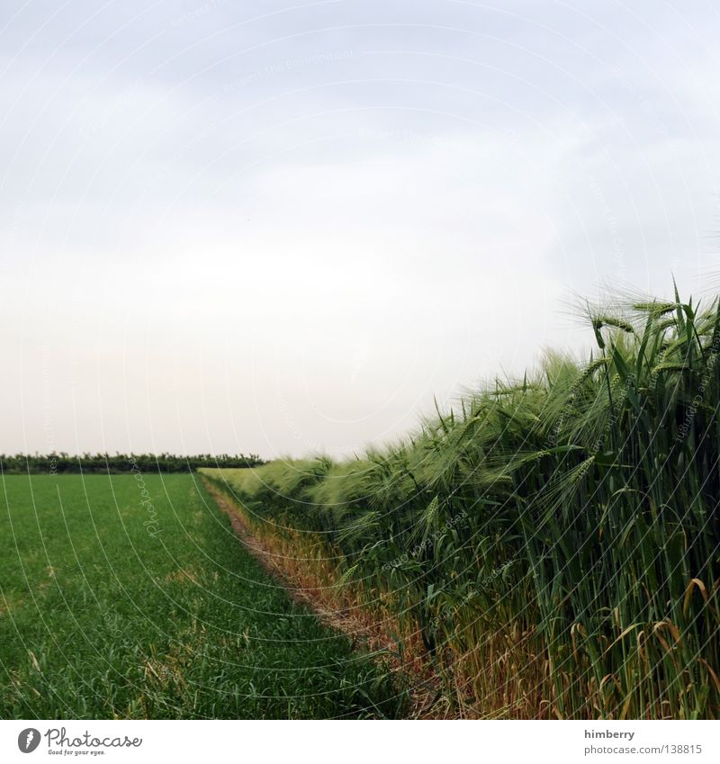 Sky Nature Summer Landscape Meadow Field Food Growth Nutrition Agriculture Grain Farm Grain Harvest Organic produce Ecological