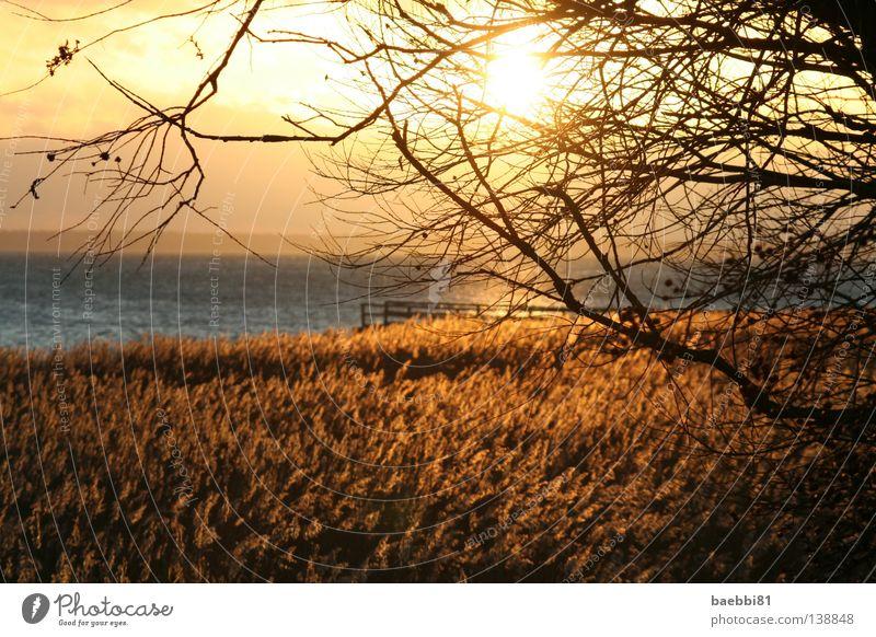Water Sky Sun Ocean Beach Autumn Warmth Orange Field Physics Branch Twig