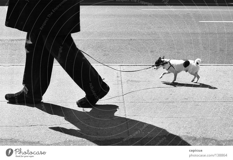 chihuahua Black & white photo Man Traffic infrastructure dog stroll walk board walk black & white pet small sun shadow man with dog ridiculed coat cold leash
