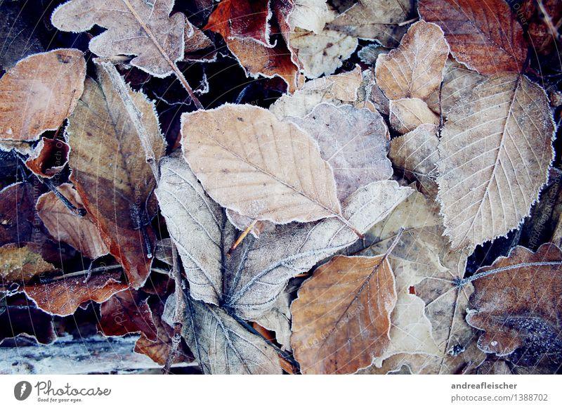Frozen Autumn Nature Plant Winter Bad weather Ice Frost Leaf Esthetic Elegant Fresh Cold Brown White Cool (slang) Power Serene Contentment Healthy Oak leaf