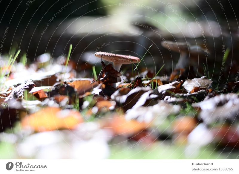 Nature Plant Green Landscape Environment Autumn Food Brown Contentment Collection Mushroom Thanksgiving