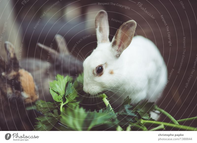 vegetarian feeding Animal Pet Animal face 1 3 Group of animals To feed Cuddly Cute Hare & Rabbit & Bunny Eating Feeding Colour photo Subdued colour