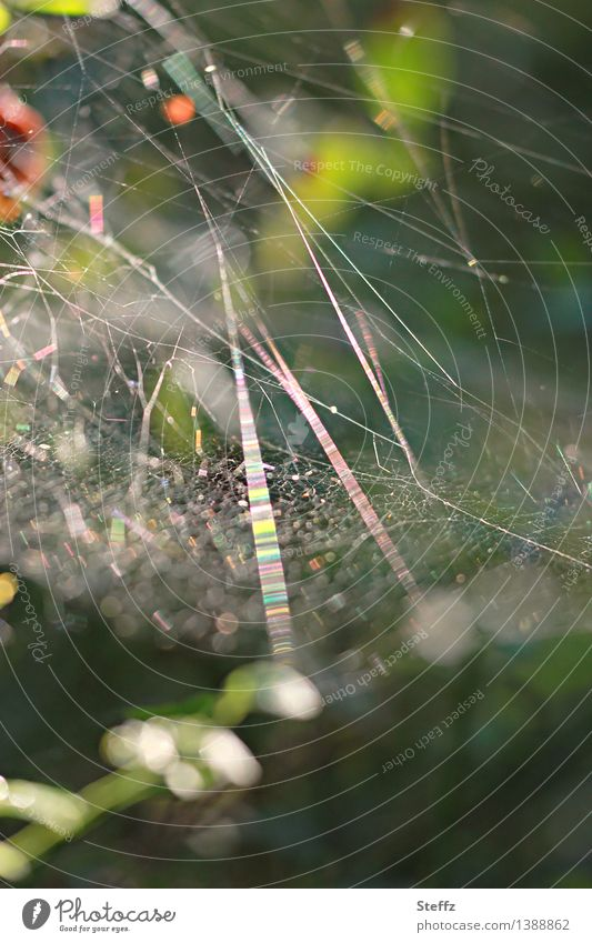 light network Nature Forest Line Net Network Glittering Natural Beautiful Green Mood lighting Forest atmosphere Chaos Spider's web Glitzy Visual spectacle