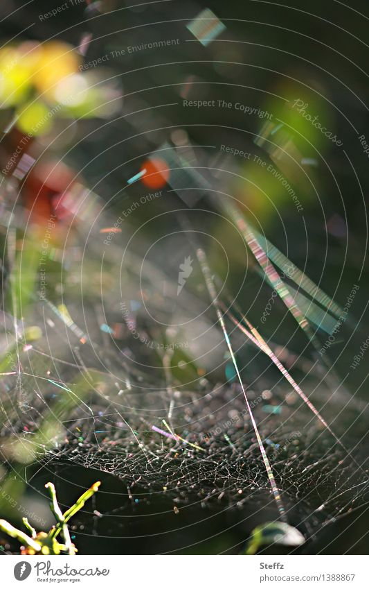 lightfully networked Nature Summer Autumn Forest Spider's web Near Natural Beautiful Mood lighting Chaos Colour Network Symmetry Reticular Illuminating
