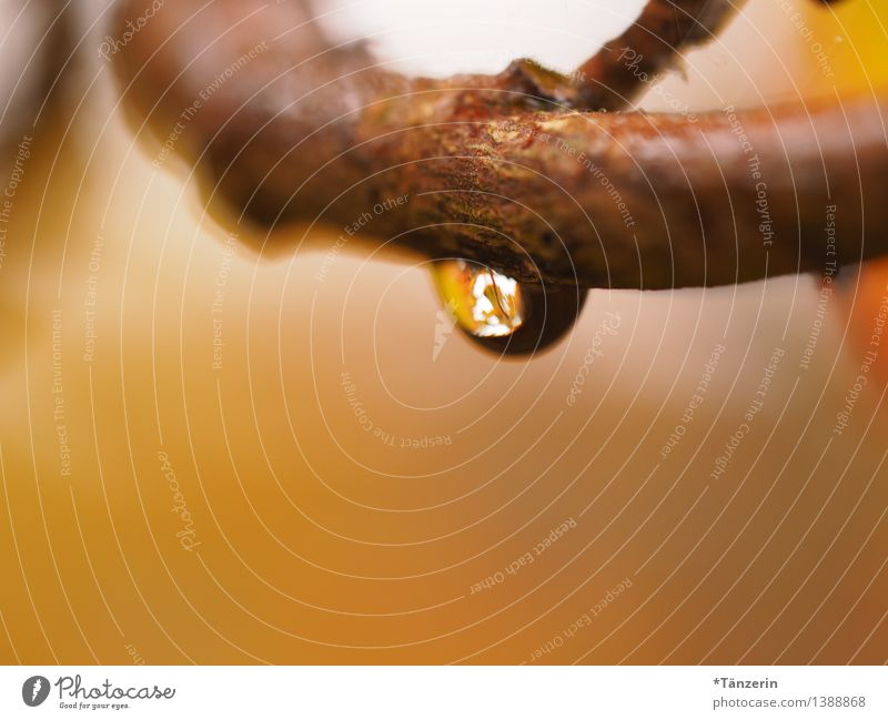 Raindrop I Environment Nature Plant Elements Water Drops of water Autumn Bad weather Tree Twigs and branches Garden Forest Esthetic Fresh Wet Natural Beautiful