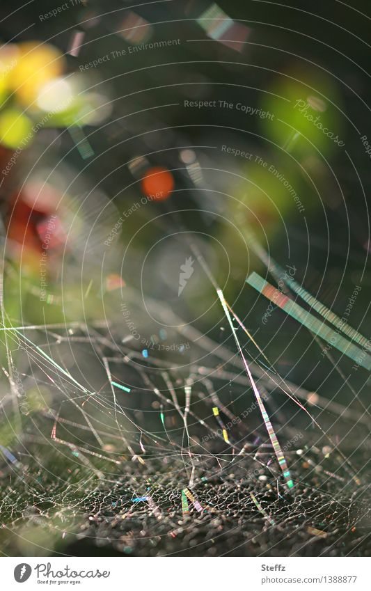 Spider Web Universe Nature Summer Autumn Forest Glittering Fantastic Natural Beautiful Green Red Mood lighting Forest atmosphere Chaos Network Symmetry Abstract