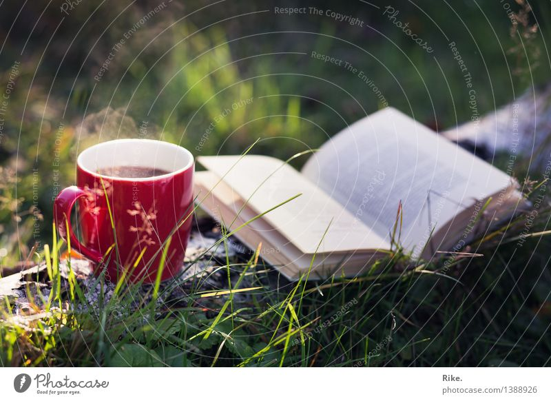 Time is luck. Beverage Hot drink Coffee Tea Cup Leisure and hobbies Reading Nature Summer Autumn Beautiful weather Tree Forest Relaxation Romance Calm