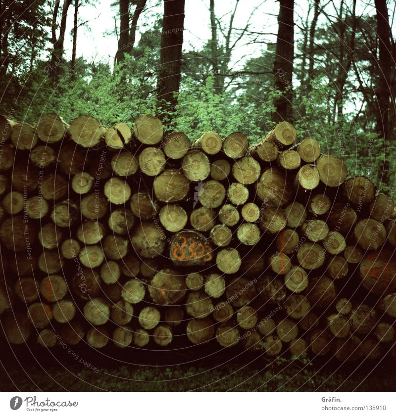 Wood in front of the hut Forest Logging Beat Timber Raw materials and fuels Renewable raw materials Tree trunk Cycle path Bushes Leaf Annual ring Environment