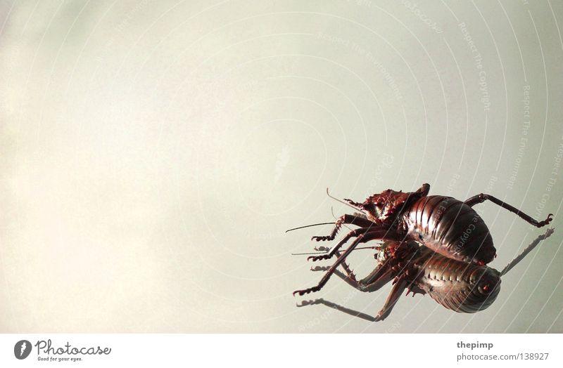 White Red Black Feet Legs Fear Mirror Spider Beetle Feeler Crawl Bow Armor-plated