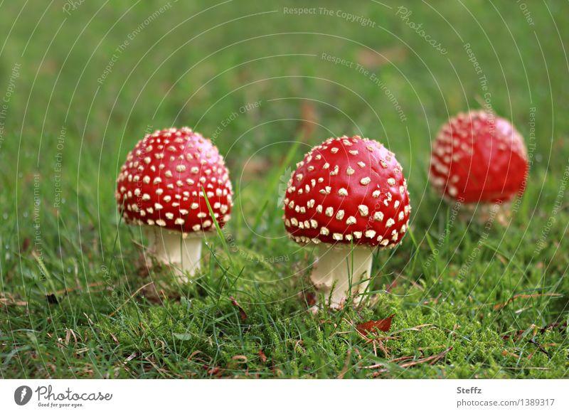 three charms Toadstools mushrooms Amanita Muscaria toxic mushrooms red mushrooms Good luck charm Cute September Early fall Autumnal Fairy tale Fabulous