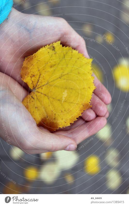 Nature Plant Colour Hand Leaf Environment Yellow Life Autumn Emotions Senior citizen Gray Park Illuminate Earth Gold