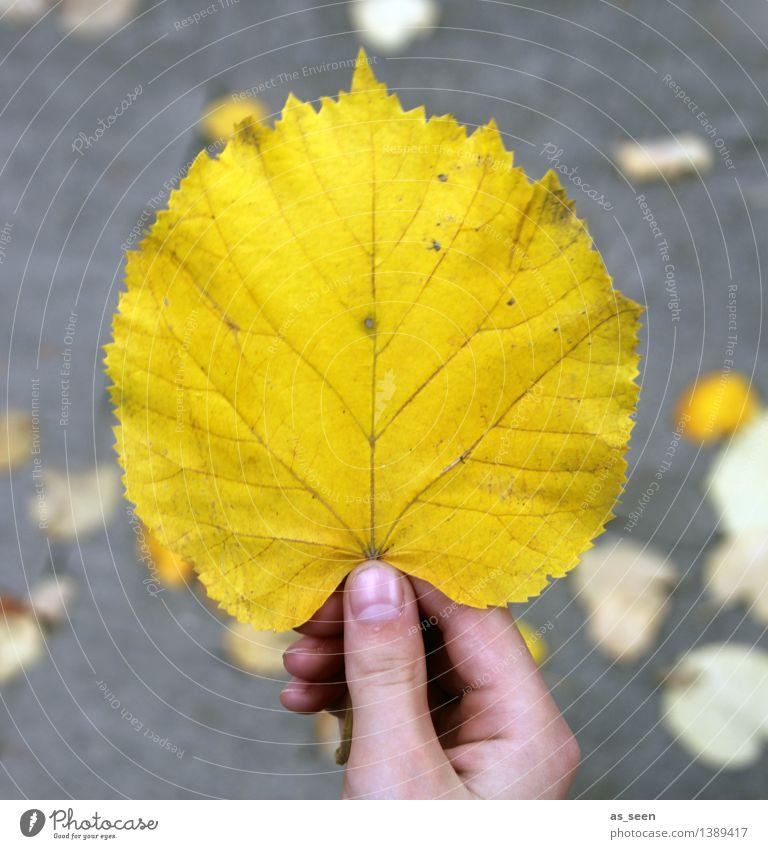 Nature Colour Tree Hand Leaf Environment Yellow Street Life Autumn Senior citizen Gray Bright Park Illuminate Earth