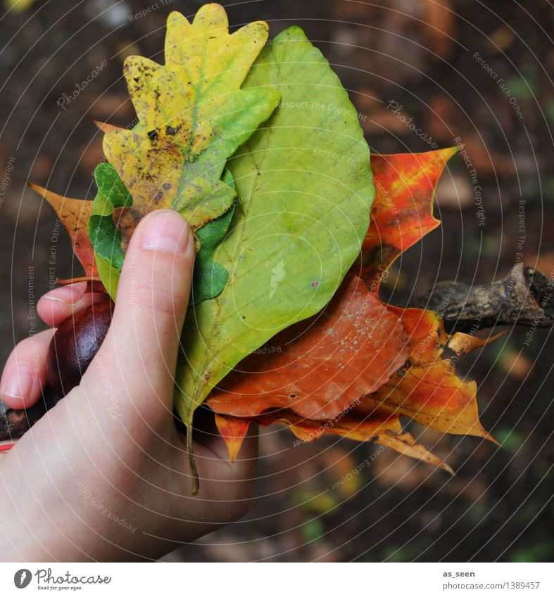 Nature Plant Green Colour Hand Leaf Forest Environment Life Autumn Natural Brown Park Orange Illuminate Earth