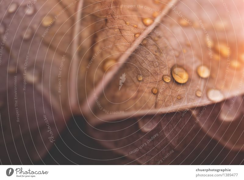 Nature Beautiful Tree Leaf Environment Yellow Autumn Natural Brown Rain Orange Gold Esthetic Drops of water Beautiful weather