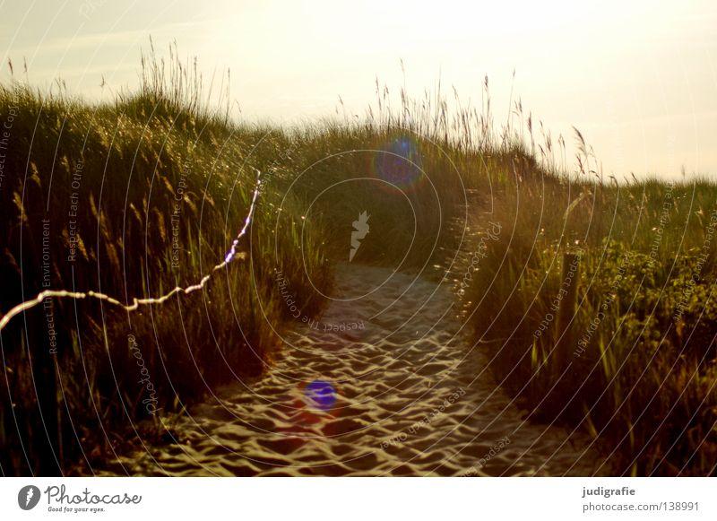 Beautiful Sky Ocean Beach Vacation & Travel Colour Relaxation Grass Warmth Sand Coast Physics Beach dune Baltic Sea Darss Western Beach