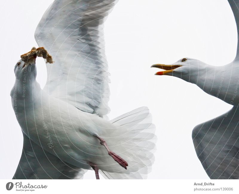 Mine! Norway Catch To feed Cold Fight Ocean Seagull Arctic Ocean White Bird Feather Fjord Flying Bright Sky waterfowl
