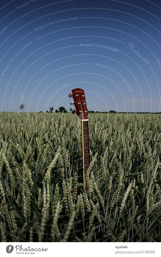 6-string weed Field Agriculture Mechanics Musical instrument string String instrument Rye Wheat Oats Millet Summer Horizon Beautiful weather Nutrition Plant