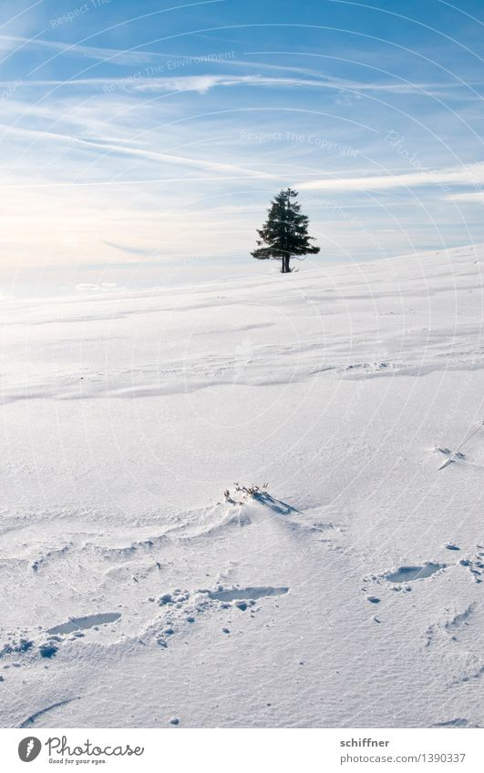 Ä Tännchen, Ä Tännchen! Environment Nature Sunlight Winter Beautiful weather Ice Frost Snow Plant Tree Stand Blue White Loneliness Individual 1 Fir tree