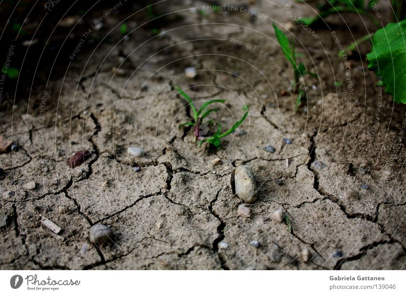arid Colour photo Life Earth Sand Rain Grass Meadow Field Stone Growth Dry Brown Gray Green Red Hope Africa Earthquake Spacing Gap New start Maturing time