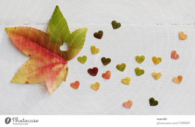 Autumn Love II Nature Plant Tree Leaf Emotions Moody Heart Sincere Maple tree Multicoloured Autumnal Heart-shaped Colour photo Interior shot Studio shot