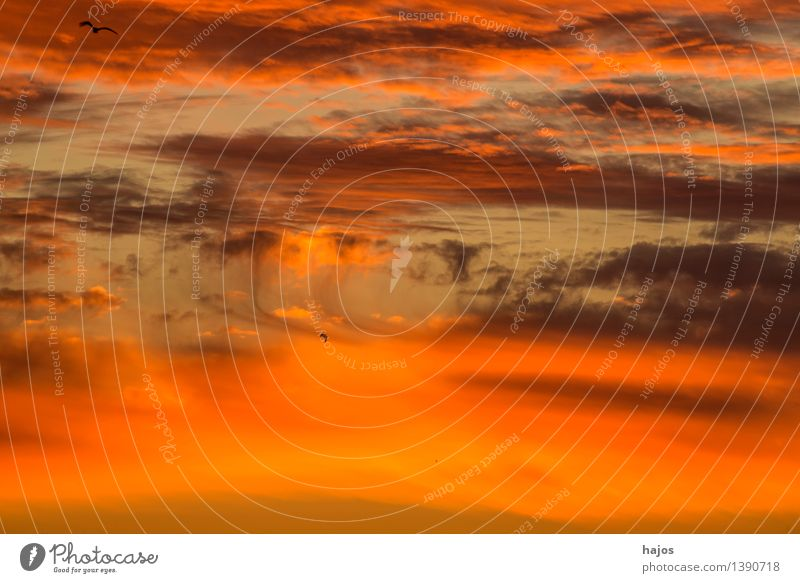 Red sky Summer Nature Clouds Weather Pink Moody Romance Sky Orange Copy Space Smooth pile Colour photo Multicoloured Exterior shot Deserted Copy Space bottom