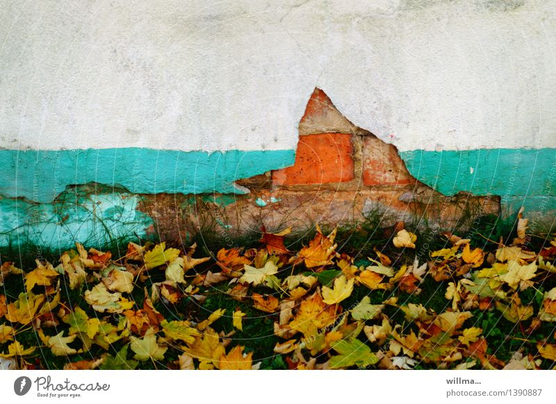 flaked off. Autumn Autumn leaves Leaf To leaf (through a book) Wall (barrier) Wall (building) Broken Derelict Flake off Rendered facade Brick facade Turquoise