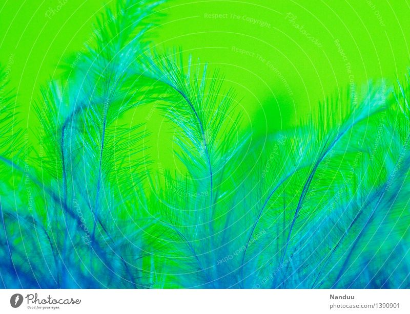 Blue Green Decoration Feather Esthetic Soft Safety (feeling of) Cuddling Pleasant Fuzz
