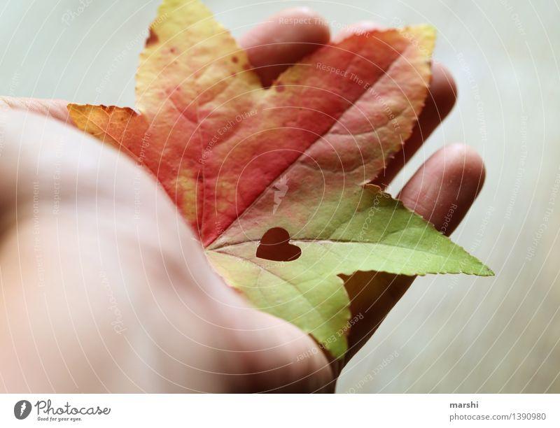 A handful of autumn Nature Plant Autumn Leaf Moody Maple tree Autumnal Hand Heart Sincere Love Beautiful Colour photo Multicoloured Exterior shot Close-up