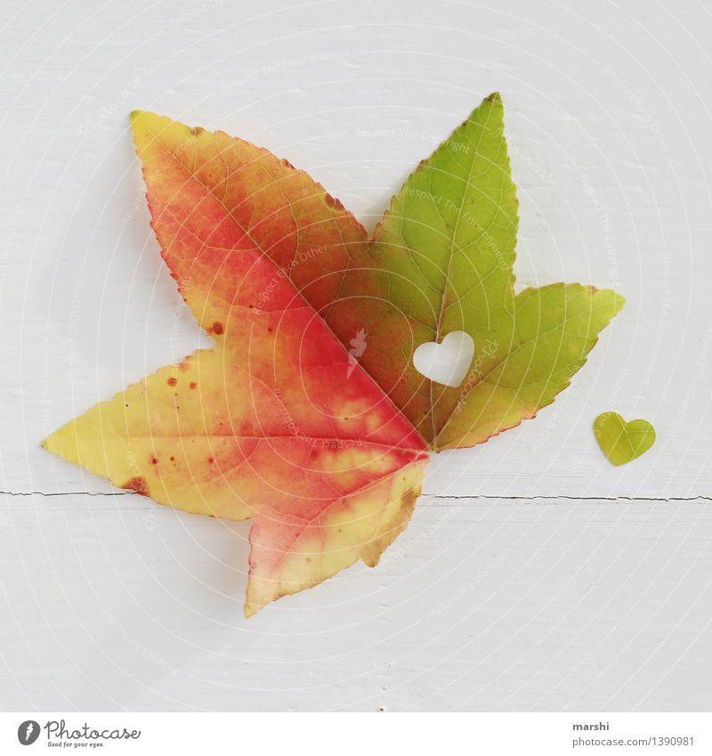 Nature Plant Leaf Love Autumn Emotions Moody Heart Seasons Infatuation Autumnal Maple tree