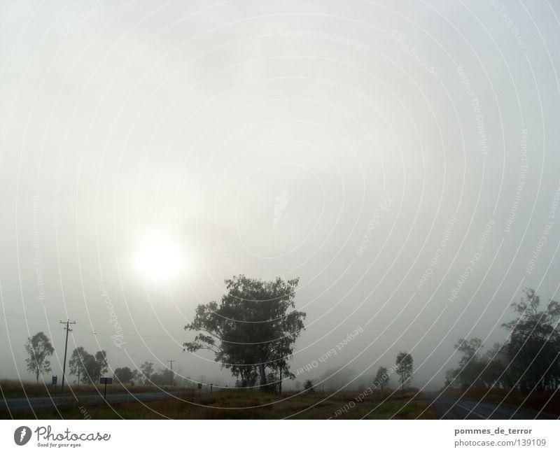 Calm Landscape Fog Idyll Australia Pastel tone