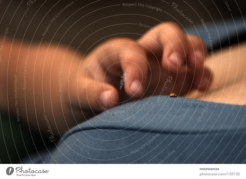 Child Hand Fingers Desire Catch Concentrate Side Door handle Beetle Caution Children`s hand