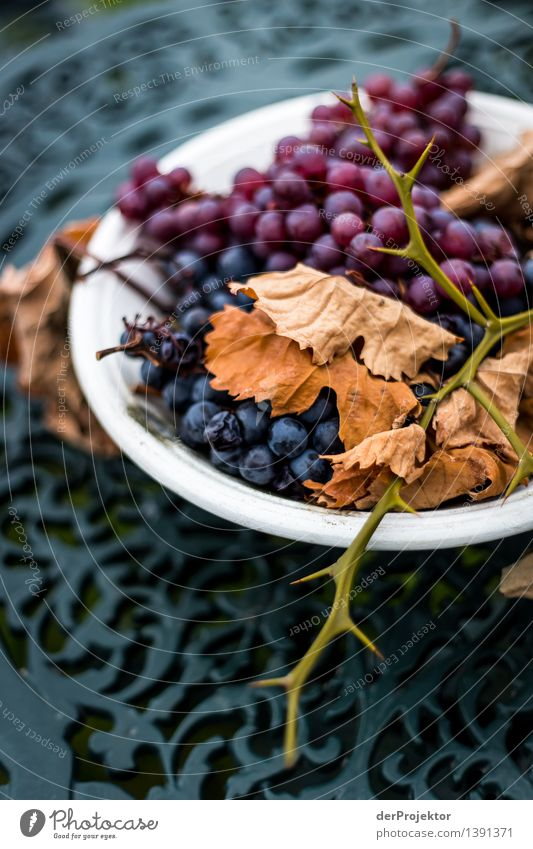 Vacation & Travel Old Plant Leaf Mountain Emotions Autumn Lifestyle Death Fruit Tourism Hiking Nutrition Esthetic Transience Curiosity
